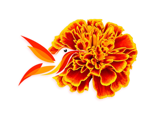 La Leyenda De La Flor De Cempaschil Inside Mexico