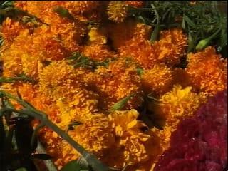 Cempazuchil Flower