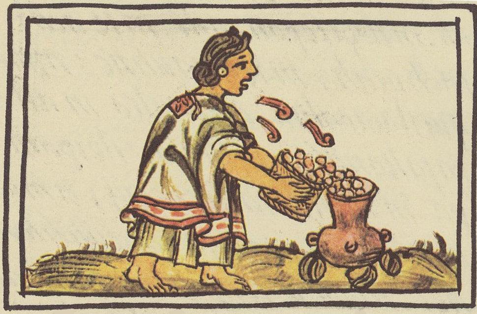 Maiz Codex