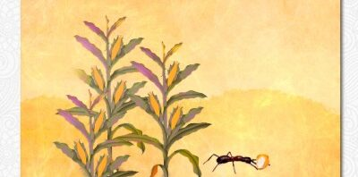 The Legend of Maize